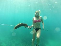Spearfish grouper